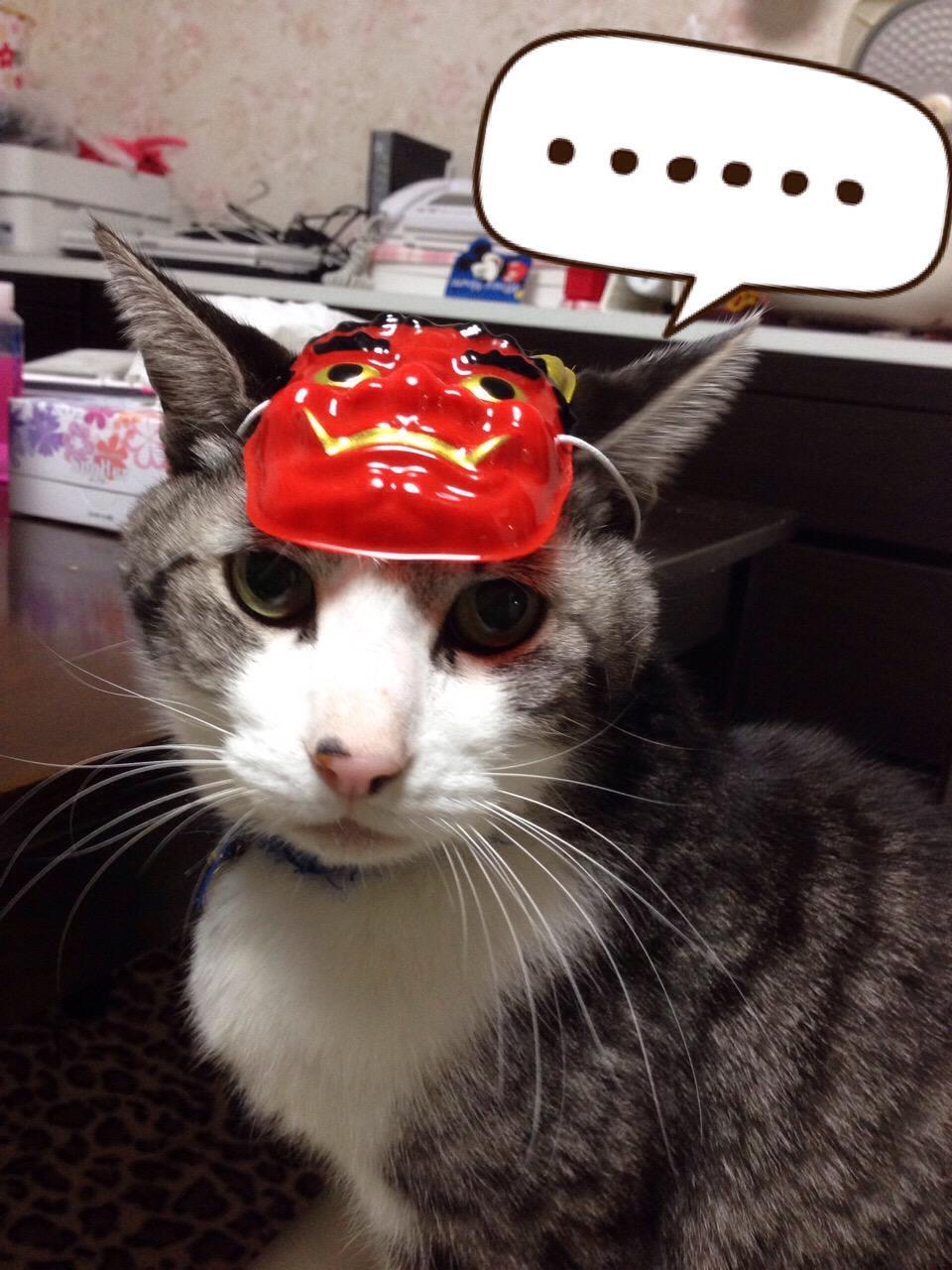の 生命 保険 ネコ